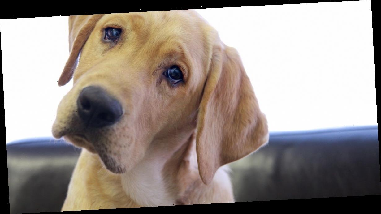 Coronavirus in dogs – experts explain your pet's risk of catching the virus
