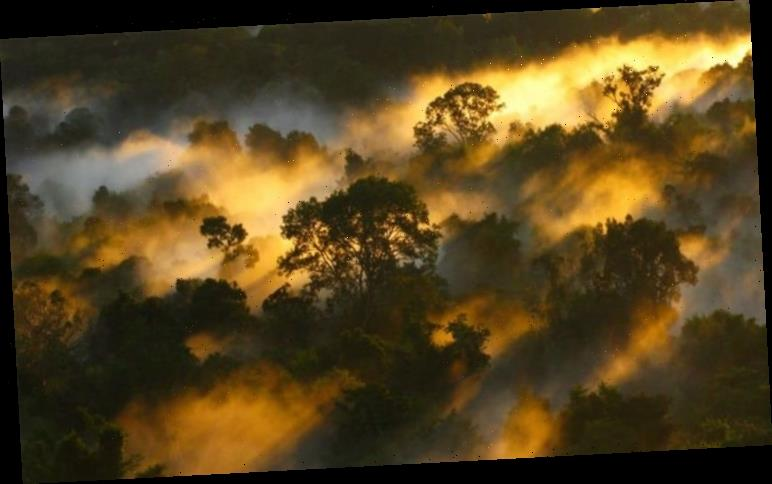 Climate change: 30-year rainforest study finds Earth's carbon sinks are nearing collapse