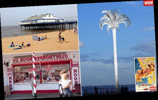 Local council approves 72ft steel palm tree to entice tourists