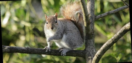 Squirrel in Colorado tests positive for the bubonic plague
