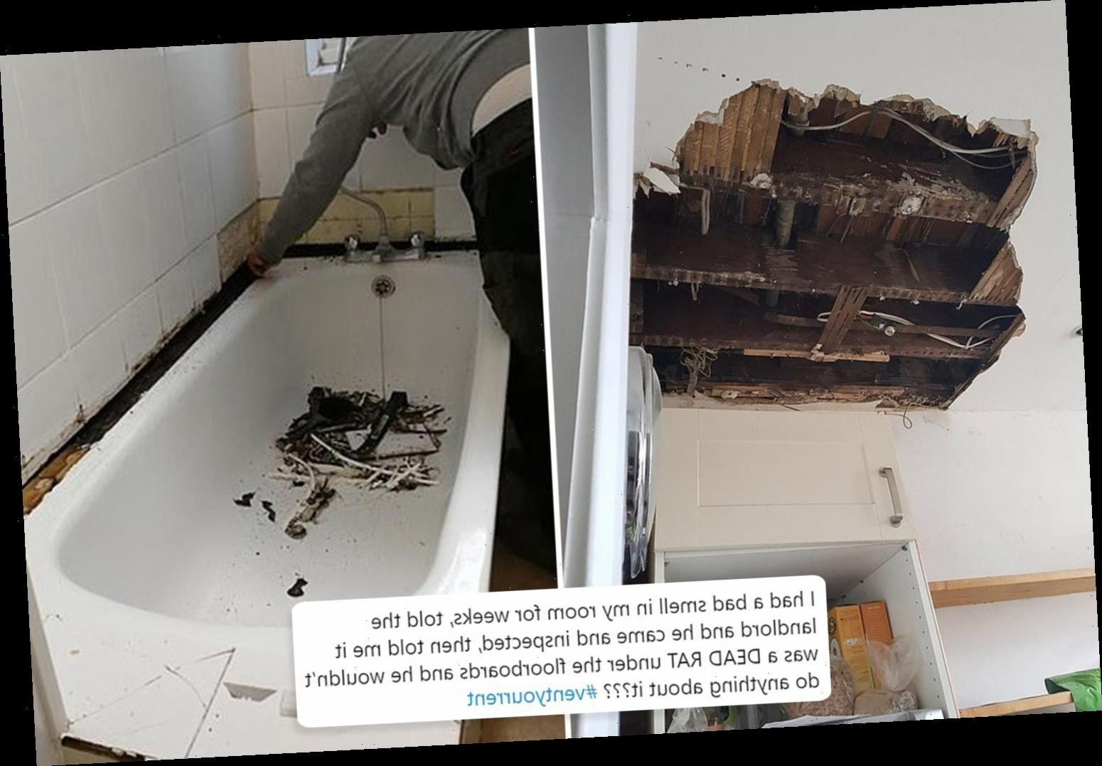 Tenants share photos of their horror homes from rats to holes in the ceiling and mouldy walls