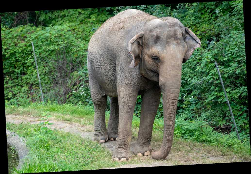Animal rights group urges court to recognize Bronx Zoo elephant as a person