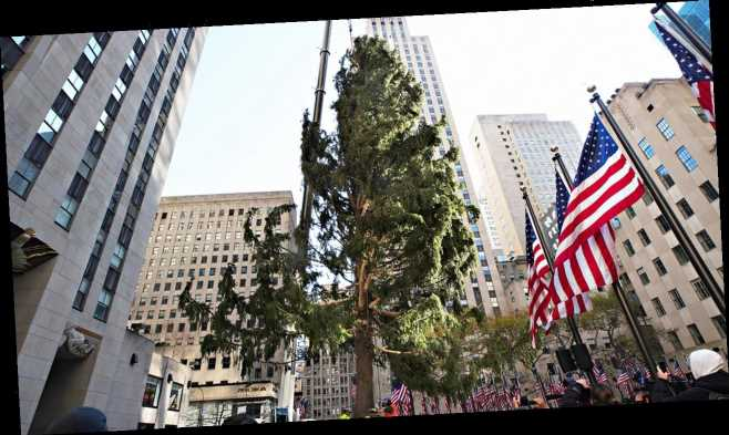 Twitter users troll Rockefeller Center Christmas tree, liken it to 'Charlie Brown'