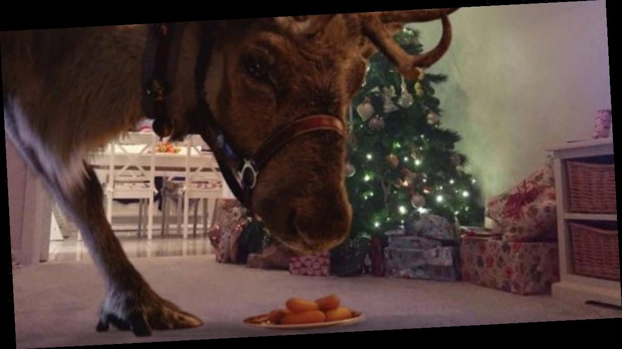 How to film reindeer eating snacks at your home this Christmas