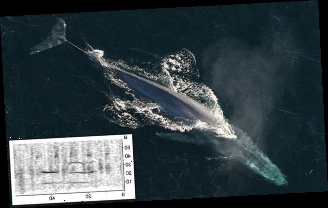 Previously unknown blue whale population identified by its unique song