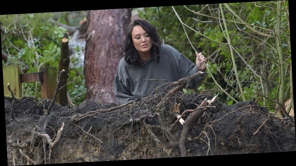 Charlotte Crosby left gobsmacked after massive tree crashes into neighbour's garden and damages house