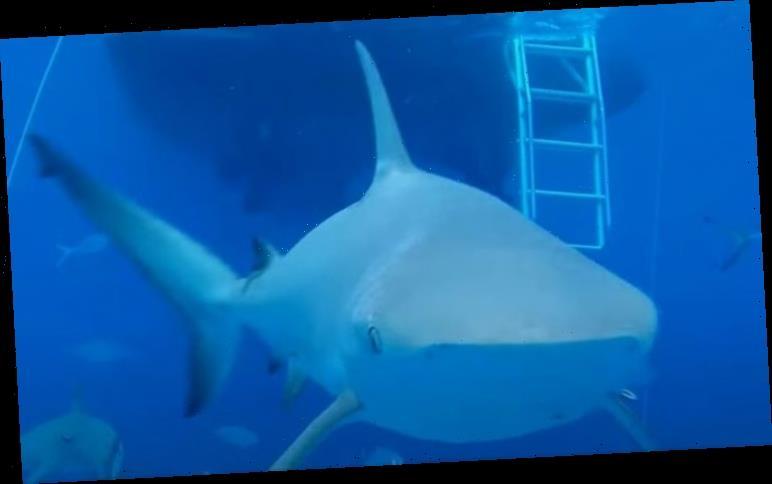Shark attacks underwater drone in terrifying footage