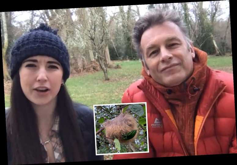 Winterwatch team stumped by mysterious ball of hair stuck in tree as viewer begs for answers