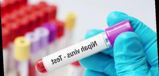 Nipah virus symptoms: What is Nipah virus?