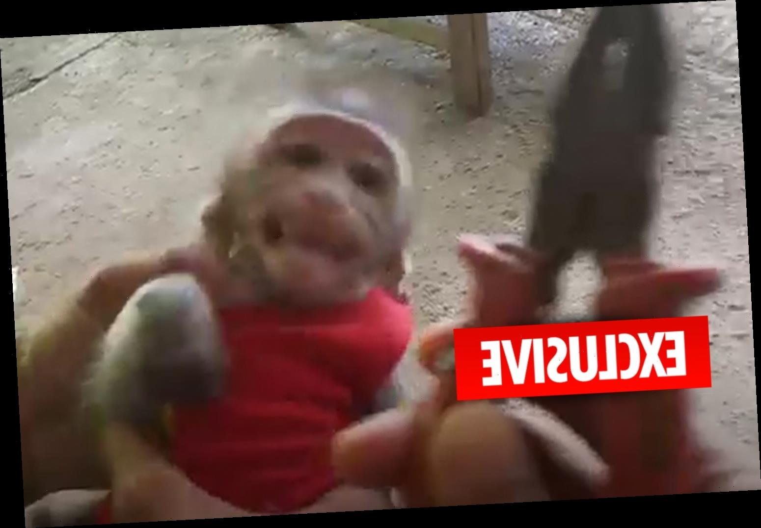 Adorable baby monkeys tortured, exploited and killed in sick YouTube snuff films for clicks