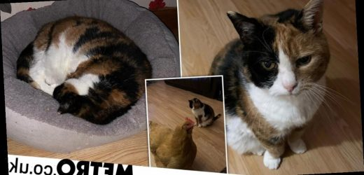 Cat who lived as a stray at Loch Lomond for 12 years finally finds forever home