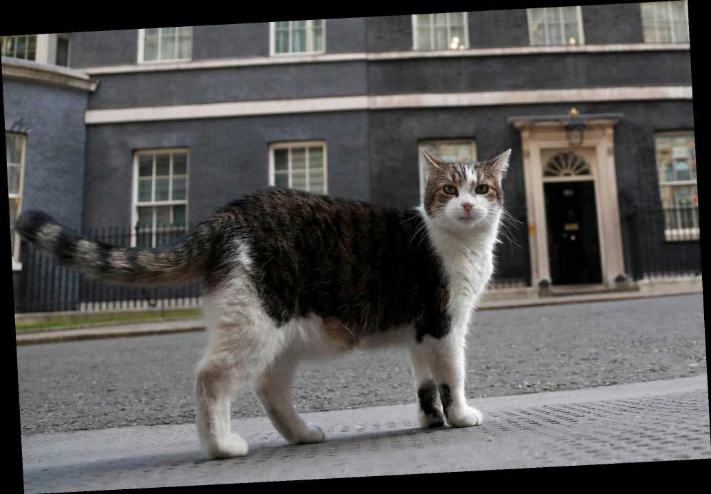 UK's chief mouser celebrates 10 years on the prowl