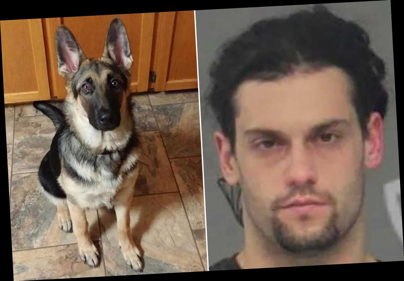 Upstate New York man accused of killing puppy, throwing it in the trash