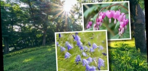 Shade loving plants: Which plants are best planted in shade? From ivy to foxglove