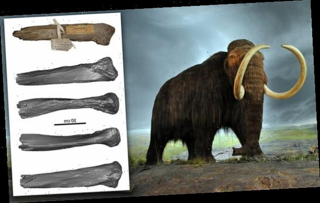 Woolly mammoths may have lived alongside humans in New England