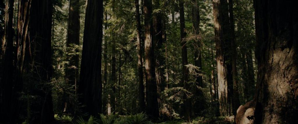 'Sasquatch': Director Joshua Rofé On Bringing Together Bigfoot, Weed & Murder In Hulu Doc Series