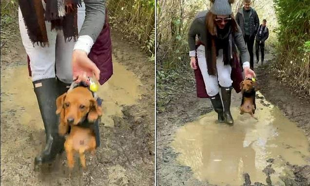 Dachshund kicks its tiny legs to swim as it is CARRIED over a puddle