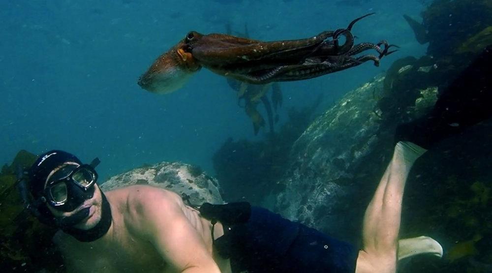 Netflix Wins Second Straight Best Documentary Feature Oscar With 'My Octopus Teacher'