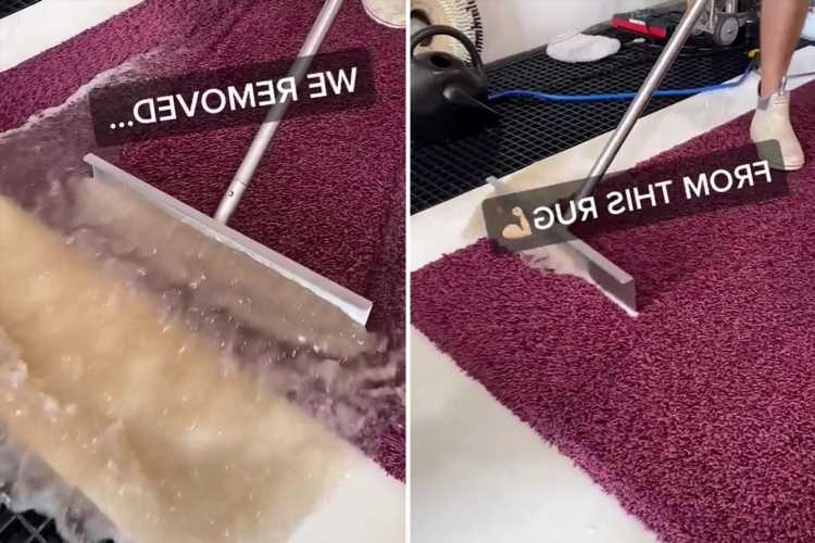 Professional carpet cleaner horrified after they remove 'gallons of pee' from a filthy purple rug