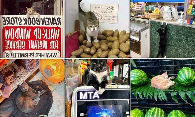 Social media users share snaps of cats taking over supermarkets