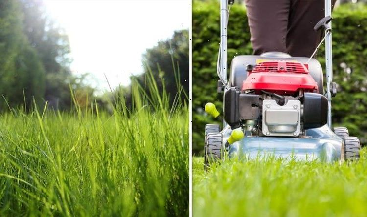 Why you shouldn't mow the lawn in May – What No Mow May is all about