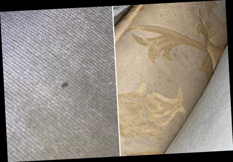 Gran covered in bed bug bites after finding 'mouldy mattress hidden inside new one'