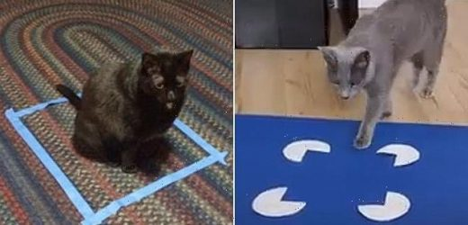 Cats DO love sitting in boxes, even if  it's an optical illusion