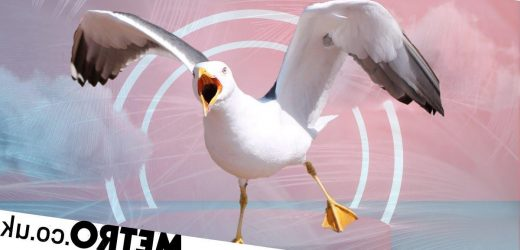Seagulling: The dating trend where you claim someone even if you don't want them