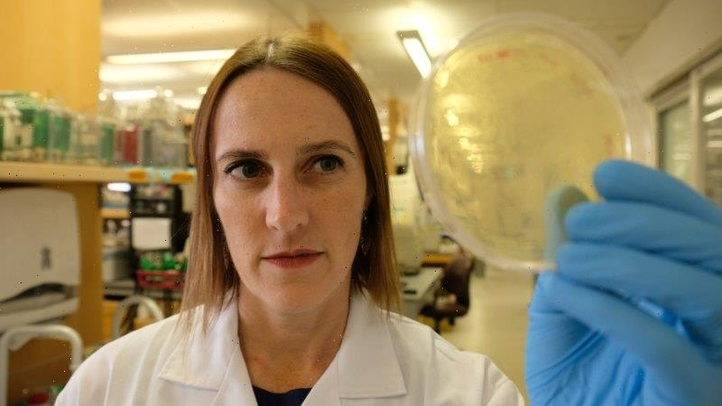 Australian scientist, the sole foreign researcher at the Wuhan lab, speaks out