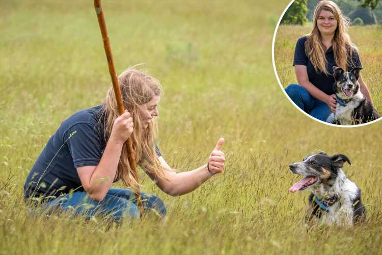 Deaf collie can now round up sheep again after being taught sign language