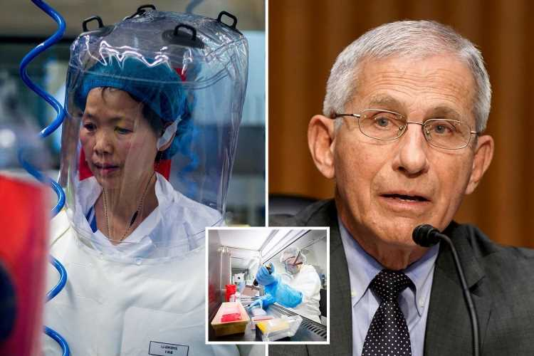 Dr Fauci dismissed e-mail warning about China's Covid cover-up because its 'too long for me to read'