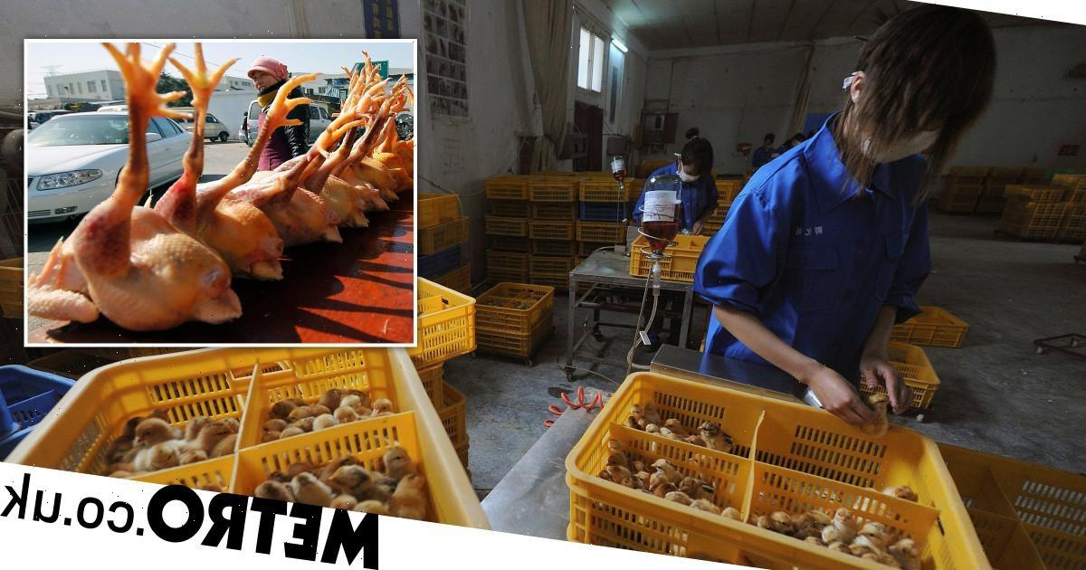 First case of human infected with rare bird flu strain found as man in hospital