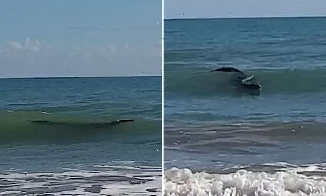 Four-metre crocodile spotted swimming at popular beach in Queensland