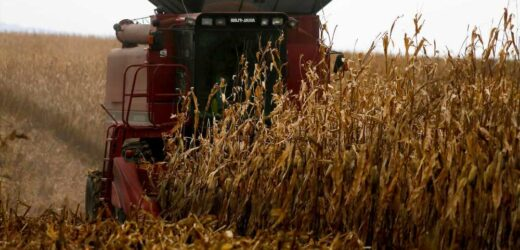 Judge halts Biden's $4B financial aid program for farmers of color