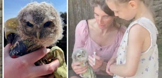 Our Yorkshire Farm's Amanda Owen inundated with replies after candid update on bird rescue