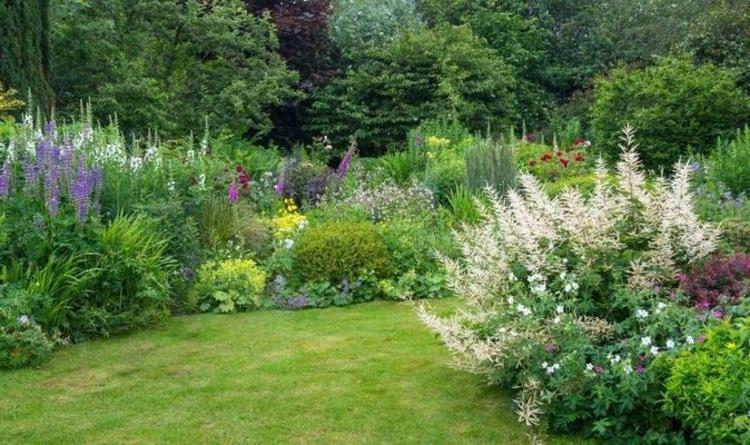 What to plant out this month – Your June 2021 guide