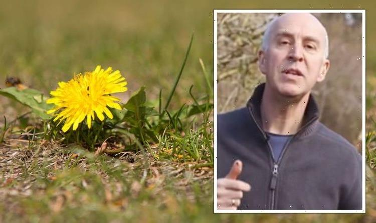 'Works very quickly!' Gardening expert shares how to 'control' weeds on your lawn