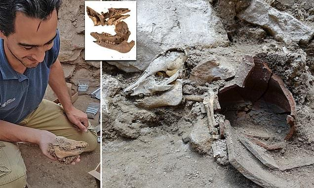 2,700-year-old pig remains found Jerusalem suggests some Jews ate pork