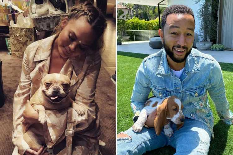 Chrissy Teigen gets new dog & reveals adorable name & rare breed just one week after announcing death of bulldog pup