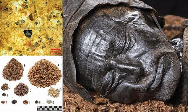 Final meal of the famous Tollund Man revealed
