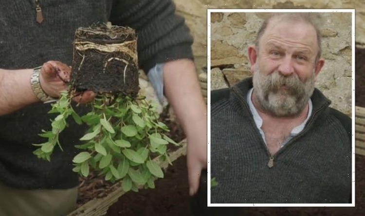 Gardening: Dick Strawbridge shares warning over planting mint herbs – 'pain in the neck!'