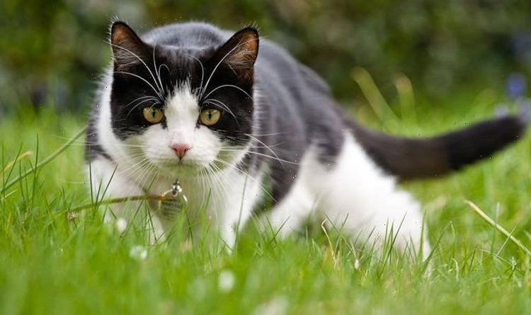 Pancytopenia symptoms: The NINE signs to look out for in your cat