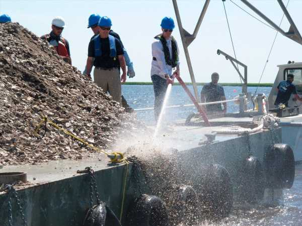 Tokyo Olympics venue threatened by 'plague' – of highly valued oysters