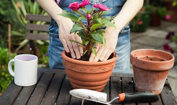 'It can be done!' Gardening pro explains what Britons can plant now