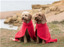 11 best dog drying coats for water-loving pooches