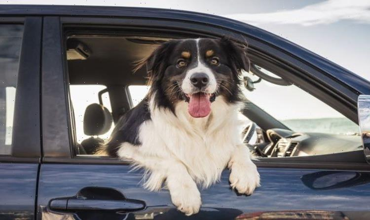 Dog owners risk £5,000 fine when driving with pets – the rules to follow
