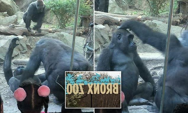 Giant male primate shocks families at Bronx Zoo with sex act
