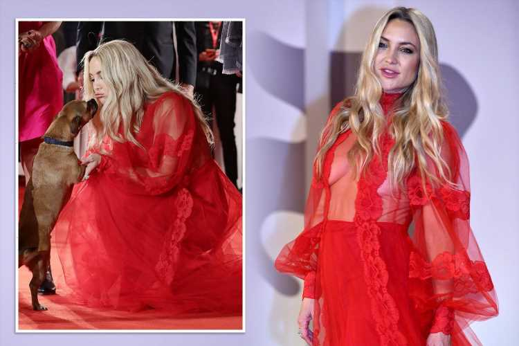 Kate Hudson, 42, wows in see-through red dress as she makes fuss over pup at Venice Film Festival