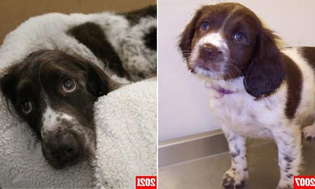Rescue dog, 14, returns to the SAME shelter she was adopted from