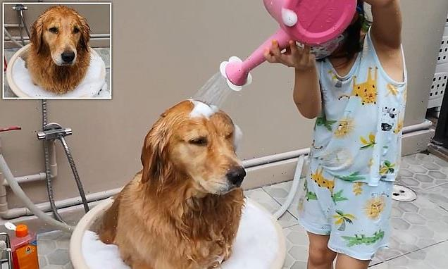 Golden retriever sits in bowl while four-year-old gives her a bath